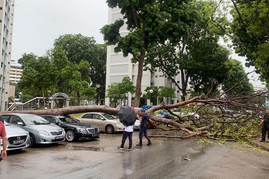 The tree, which toppled following heavy rain in Bedok North, fell on a black Mercedes-Benz.