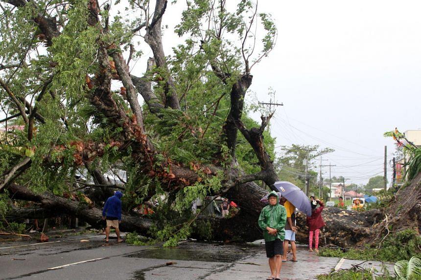 A fallen tree in Naga, the Philippines, on Dec 3, after Typhoon Kammuri.