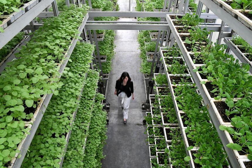 A vertical farm facility at Sky Greens, an urban farm in Lim Chu Kang.