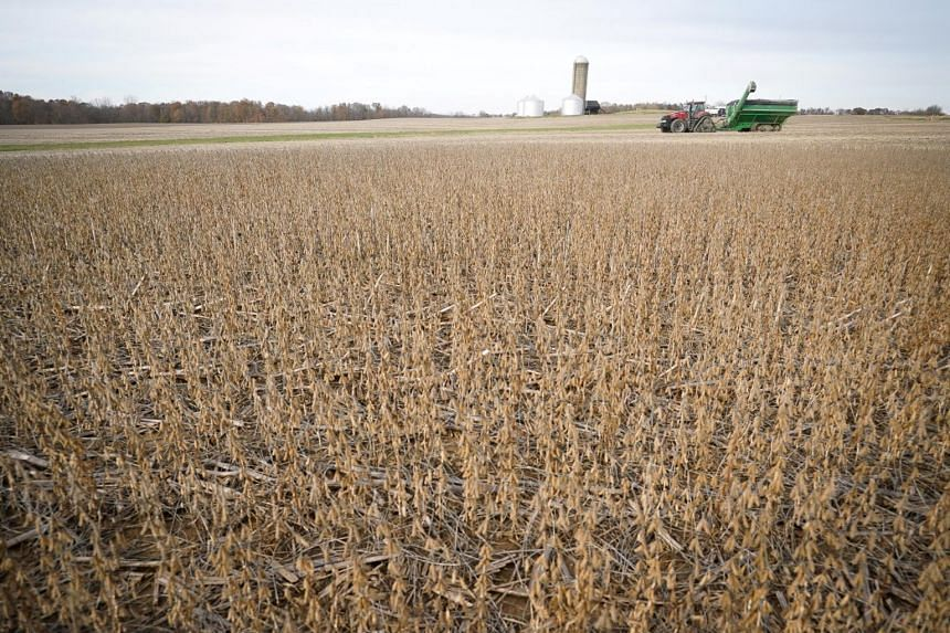 """A soybean field in Roachdale, Indiana. China has said it will offer a tariff waiver to """"some"""" imports of US soybean and pork."""