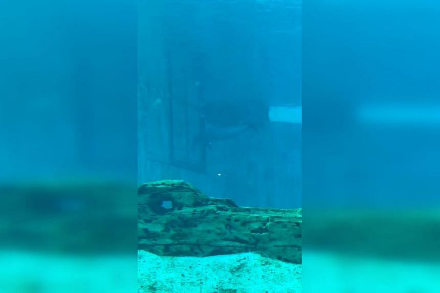 US-based organisation Empty The Tanks said the video was sent to them by a S.E.A. Aquarium visitor last year.