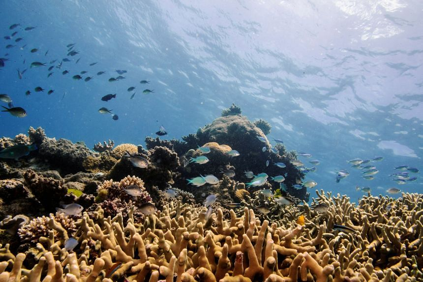 Reef tourism could see more than 90 per cent losses globally by 2100 under a high-emissions scenario.