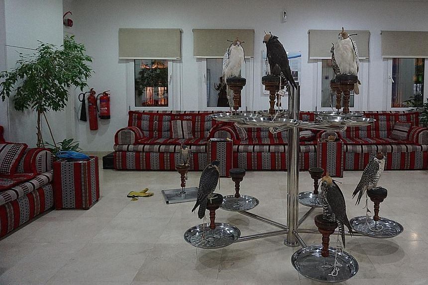 In the Souq Waqif Falcon Hospital, dozens of falcons, a status symbol, sit on tiered perches awaiting their turn.