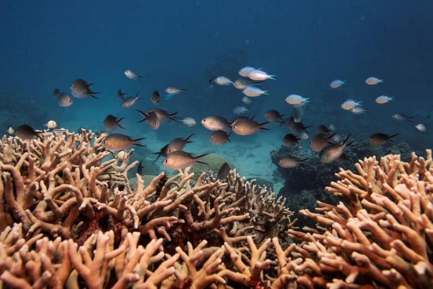 Oceans are expected on current trends to lose 3-4 per cent of their oxygen globally by 2100.