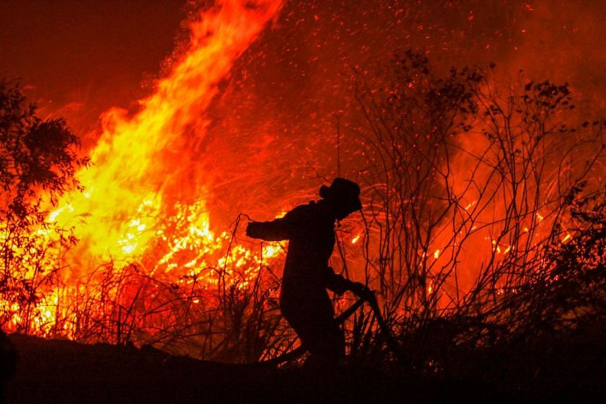 In a photo taken on Sept 11, 2019, a firefighter battles a fire in a forest at Rambutan village in Ogan Ilir, Indonesia's South Sumatra province.