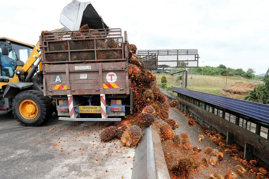 A photo taken on Jan 30, 2019, shows bunches of oil palm fruit being unloaded inside a palm oil mill in Negeri Sembilan, Malaysia.