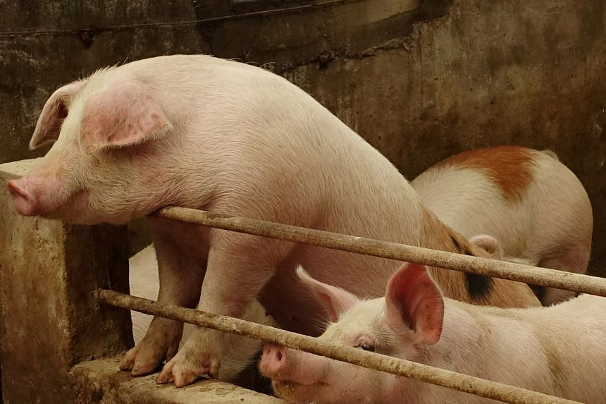 China has seen its pig herd shrink by 40 per cent compared with a year ago.