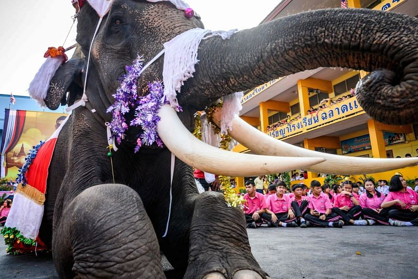 An elephant dressed in a Santa Claus costume performs during a gift presentation to schoolchildren during Christmas celebrations in Thailand on Dec 23, 2019.