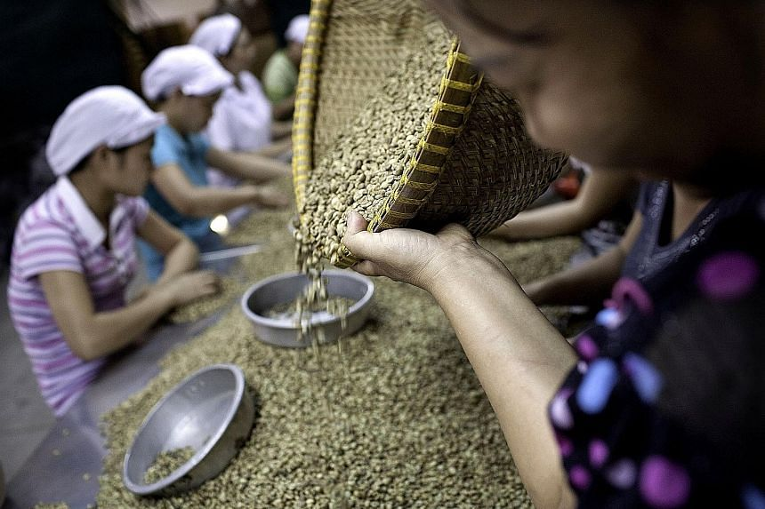 Workers sorting through green robusta coffee beans for defects that cannot be removed mechanically, at the Highlands Coffee processing plant in Ho Chi Minh City, Vietnam.