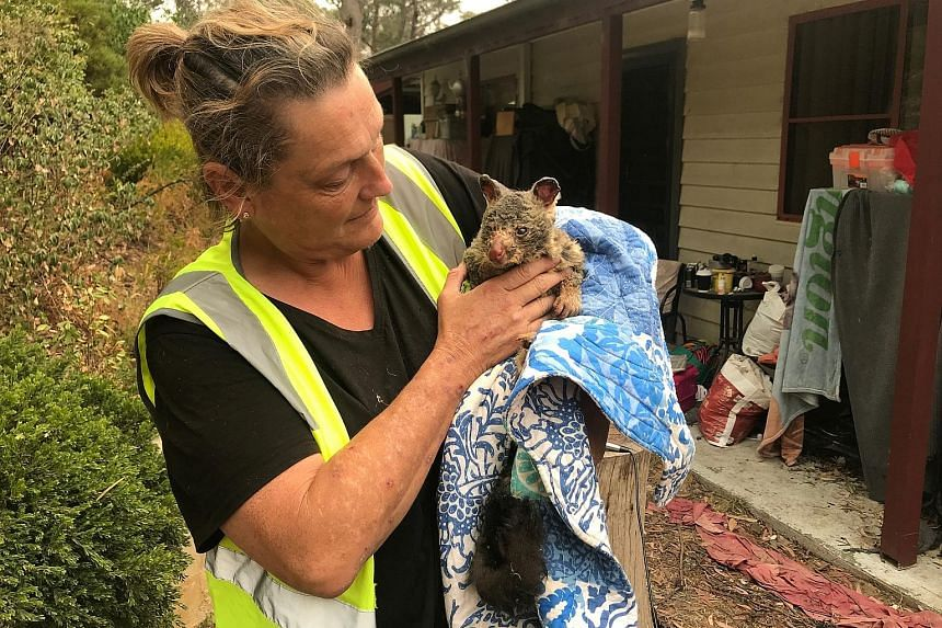 Ms Tracy Burgess, a volunteer at the Wildlife Information, Rescue and Education Service, holding a brushtail possum that was severely burned by bush fires and rescued from the rural town of Clarence in the Blue Mountains region, west of Sydney.