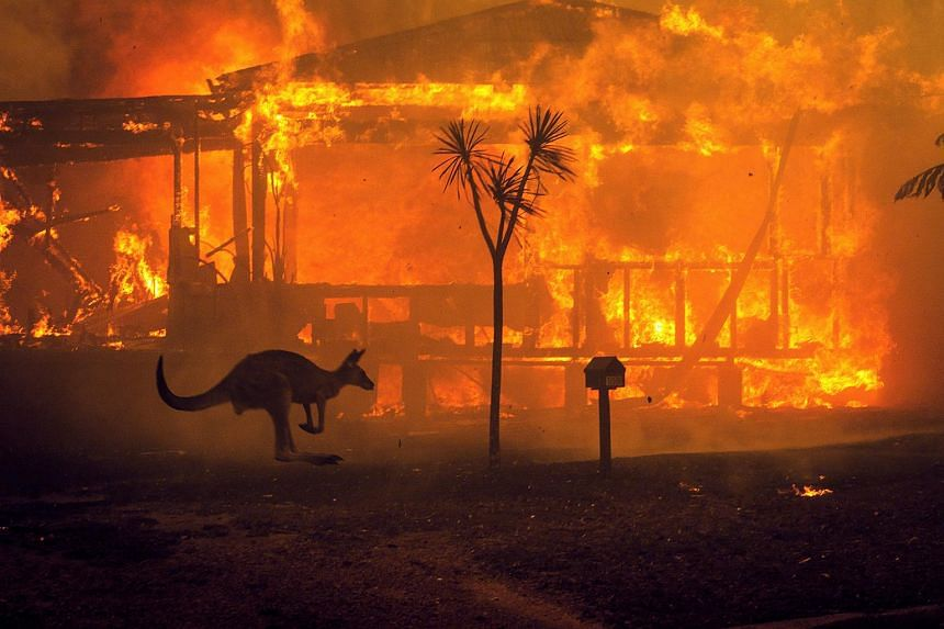 Pink Donates $500,000 to Fire Services Battling Australia Bushfires