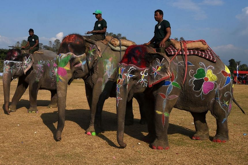 Mahouts guide their elephants during an elephant beauty pageant in Sauraha Chitwan on Jan 2, 2020.