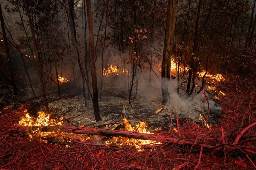 An area adjacent to the Princess Highway is covered with fire retardant that was dropped by a plane fighting massive fires near Jerrawangala, New South Wales, Australia, on Jan 2, 2020.