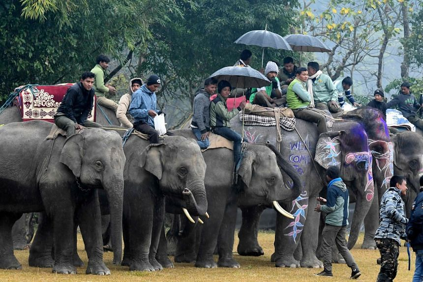 Mahout wait with their elephants before an elephant football match at Sauraha during the Elephant Festival in Chitwan on Jan 3, 2020.