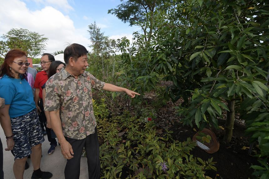 Transport Minister Khaw Boon Wan pointing out a rose apple tree at the Sembawang Hot Spring Park on Jan 4, 2020.