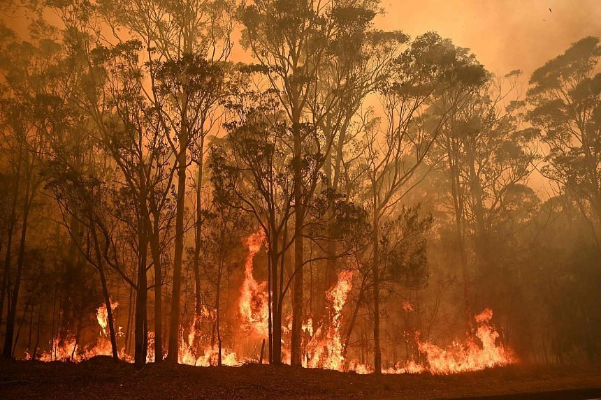 Fire raging in the town of Moruya in New South Wales yesterday. The authorities have urged tens of thousands of people, mainly along Australia's south-eastern coast, to evacuate. PHOTO: AGENCE FRANCE-PRESSE