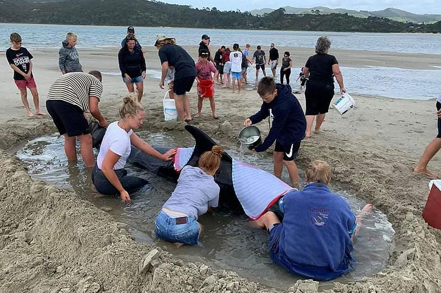 Marine conservation group Project Jonah said a pod of whales stranded overnight at the beach on the Coromandel Peninsula in North Island and about 1,000 people rushed to help save them, hampering efforts by conservation workers. Seven of the short-fi