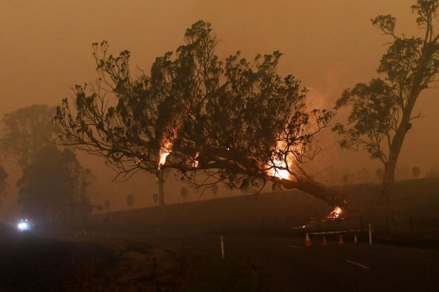 A burning gum tree is felled to stop it from falling on a car as bush fires continue in New South Wales, Australia, on Jan 5, 2020.