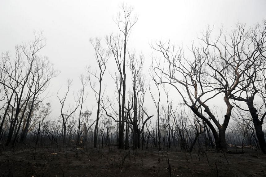 Blackened trees are seen rising from scorched ground after a wildfire near Kangaroo Valley, Australia, on Jan 5, 2020.