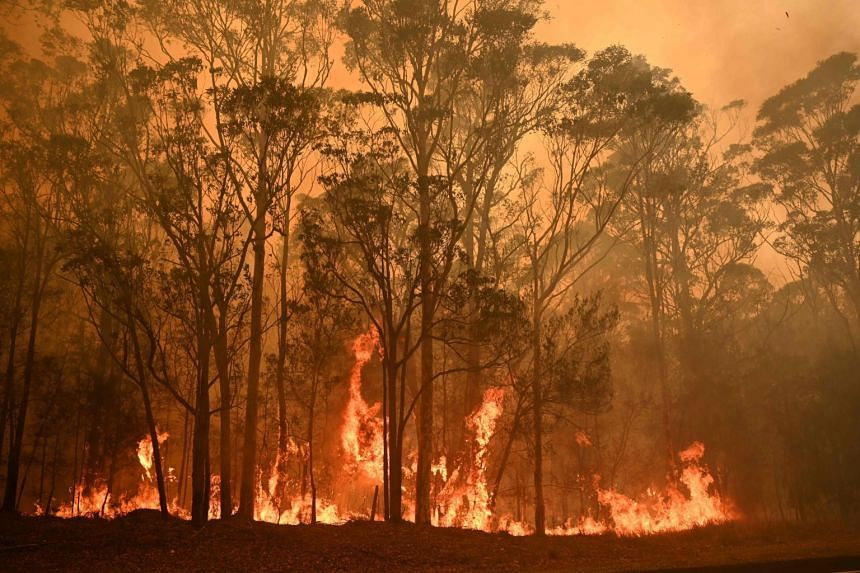 A bush fire burns in the town of Moruya, south of Batemans Bay in New South Wales on Jan 4, 2020.