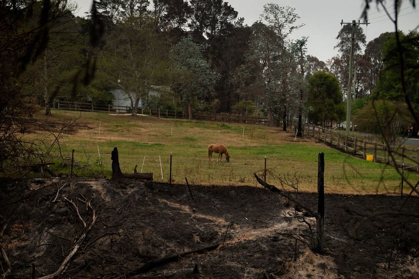 A photo of Mogo Creek, the burned area in the foreground in Australia on Jan 5, 2020.