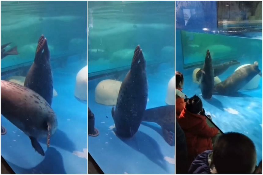 Tourists saw the animal with its head in a floor drain of its exhibit in the Sun Asia Ocean World waterpark on Dec 29.
