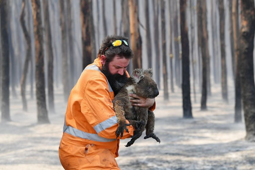 Adelaide wildlife rescuer Simon Adamczyk holds a koala he rescued from a burning forest on Kangaroo Island, Australia, on Jan 7, 2020.