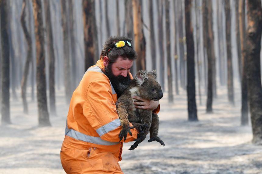 Adelaide wildlife rescuer Simon Adamczyk holds a koala he rescued from a burning forest on Kangaroo Island, Australia, on Jan 7, 2020.