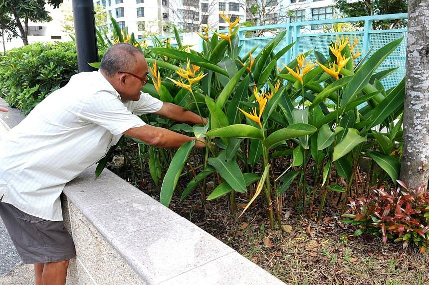APRIL 2011: The rooftop garden in Eunos where a baby boy was found buried alive. SHIN MIN FILE PHOTO JANUARY 2020: Cleaners putting back the contents of a rubbish chute bin at Block 534 Bedok North Street 3 after it had been checked by investigators.