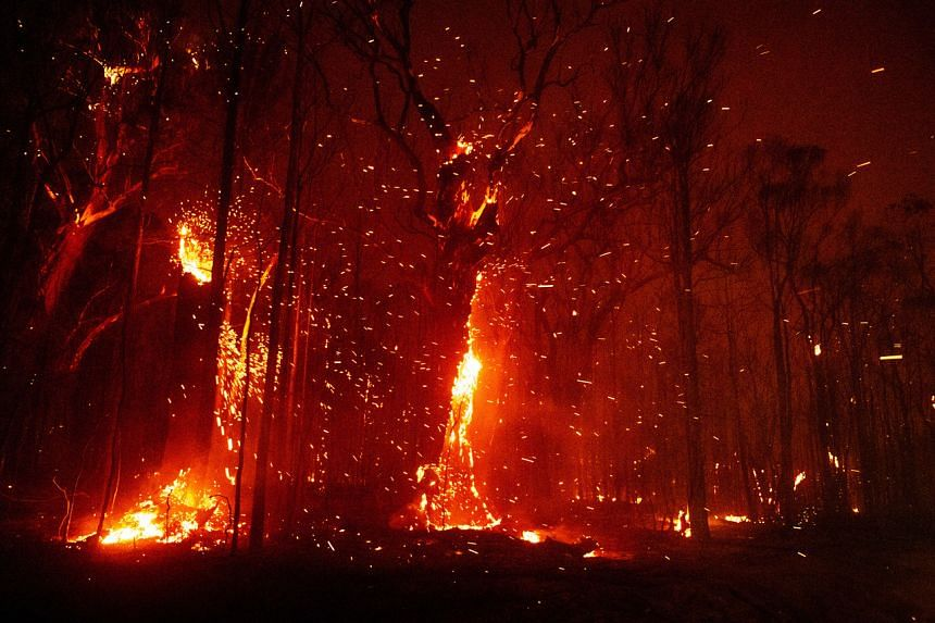 Burning bushland in Tomerong in the Australian state of New South Wales, on Jan 4, 2020.