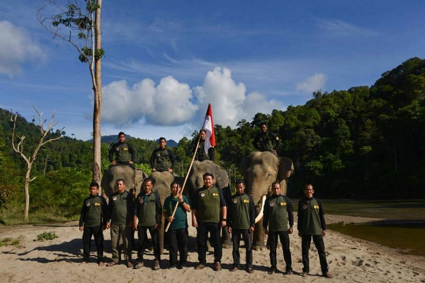 Indonesian forest rangers are seen at Sampoiniet, Aceh, on Nov 10, 2019.