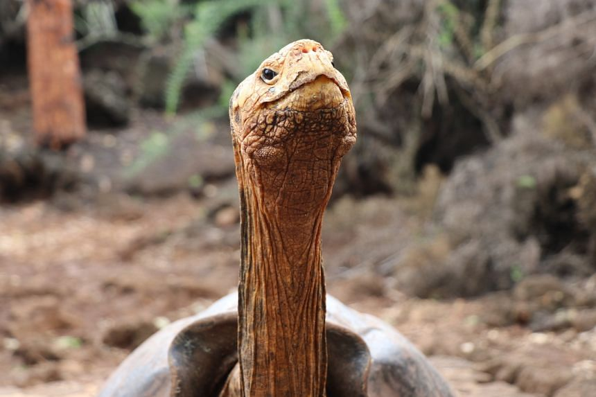 Diego helped to save its species by procreating 800 turtles.