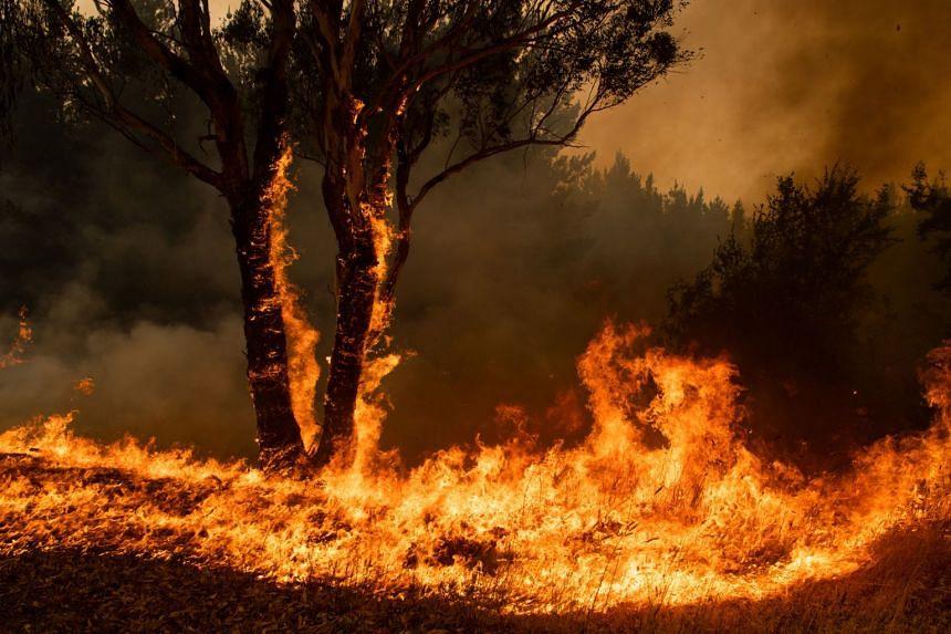 Wildfire burns in Australia on Jan 10, 2020.
