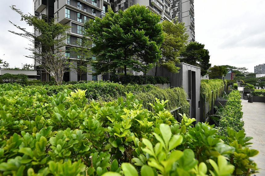 Greenery at SkyTerrace@Dawson (above), part of the Dawson estate in Queenstown, and Keat Hong (left) in Choa Chu Kang. Existing mature trees within the estates are retained during construction. PHOTOS: LIM YAOHUI, HOUSING BOARD