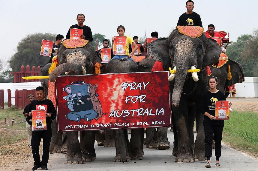 Activists and elephants marching at an elephant camp in Ayutthaya, Thailand, yesterday to raise awareness of wildlife affected by Aussie bush fires. PHOTO: EPA-EFE