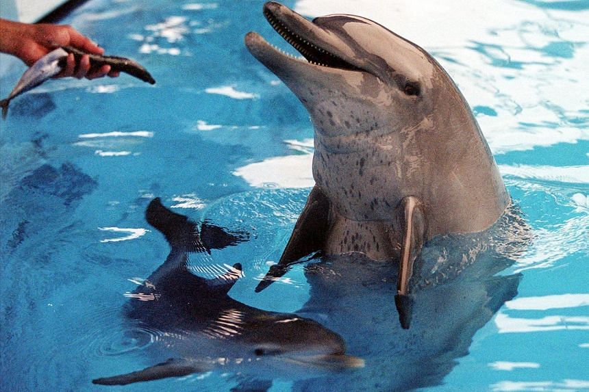 """Ocean Park said it would replace the daily dolphin and sea lion shows at its flagship enclosure with """"underwater viewing opportunities"""" for visitors."""