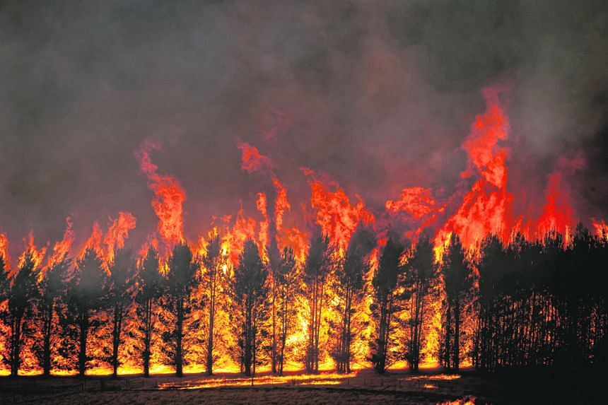 The Dunns Road Fire crowns the tops of a trees close near Maragle, Australia on Jan 10, 2020.