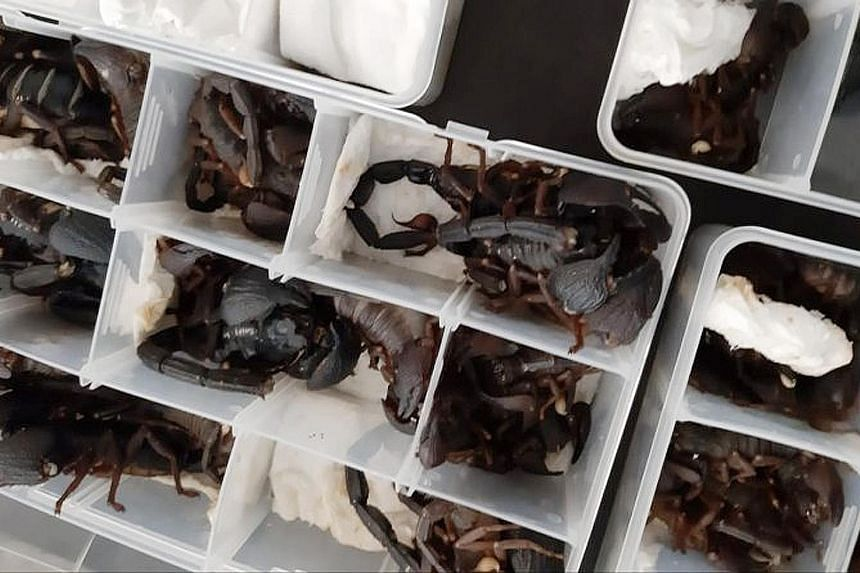 The live scorpions were found by security officials in plastic containers packed in a Chinese man's luggage. Sri Lanka has strict laws on wildlife and fauna, but smuggling bids are increasingly frequent.