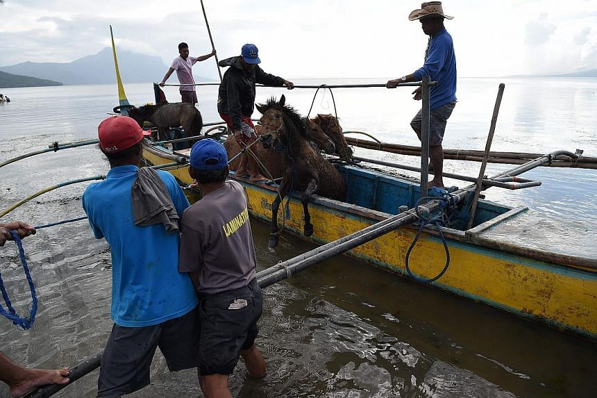 There are about 250 evacuees at Padre Pio Shrine in Santo Tomas, Batangas (above left). Residents unloading their horses from a wooden boat after rescuing them from their homes and transporting them to Balete town, Batangas province.