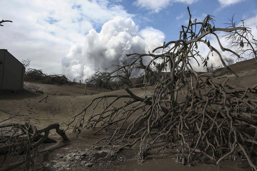 Trees covered in volcanic ash as the Taal volcano continues to spew smoke in Batangas province, Philippines, on Feb 14, 2020.
