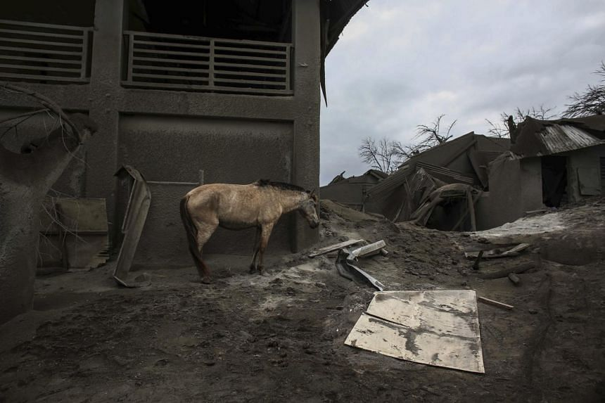 A horse standing next to a damaged structure at the Taal volcano island in Talisay, Batangas province, southern Philippines, on Jan 14, 2020.