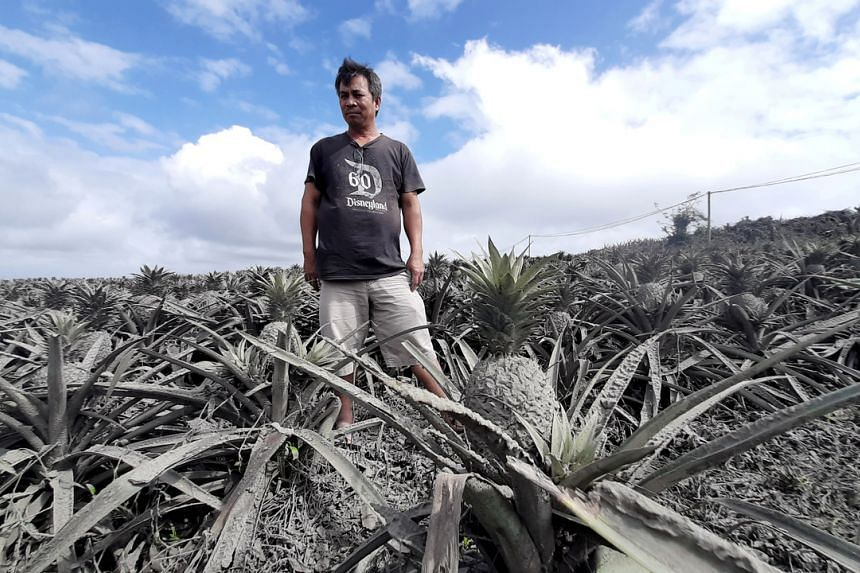 Farmer Jack Imperial is seen in his pineapple plantation covered with ash from the erupting Taal volcano, in Tagaytay, Philippines, on Jan 15, 2020.