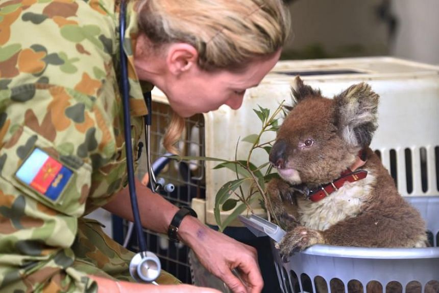 """The Federal Government this week warned that koalas could be listed as """"endangered"""" in some parts of the country."""