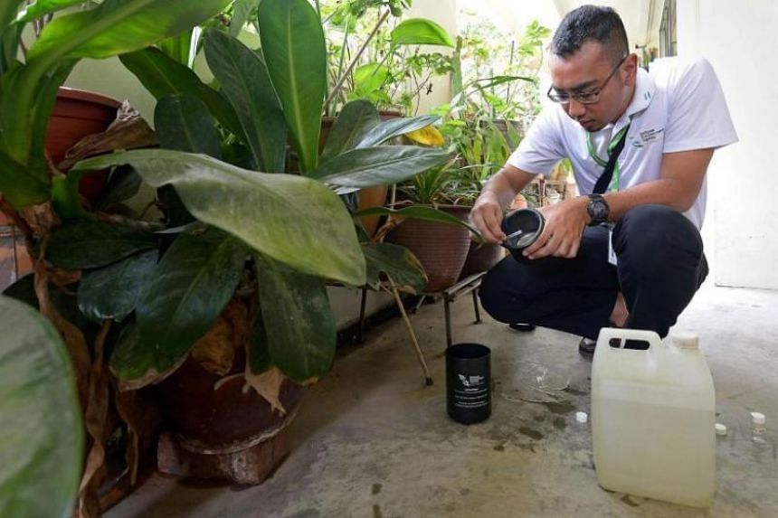 In this picture taken on March 19, 2014, a National Environment Agency officer shows how Aedes mosquitoes caught in the top part of the Gravitrap, where an adhesive layer is, are removed.