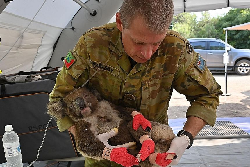 An Australian Defence Force member with an injured koala that has been treated for burns at a makeshift field hospital at the Kangaroo Island Wildlife Park on Tuesday. Below from left: Kangaroos in a smoke-filled field in Snowy Valley on the outskirt