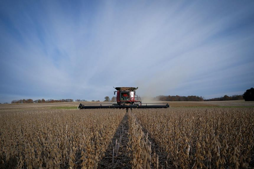 In a photo from Nov 8, 2019, soybeans are harvested from a field on Hodgen Farm in Roachdale, Indiana.