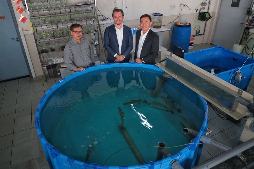 (From left) Dr Yue Genhua, senior principal investigator and programme director at Temasek Life Sciences Laboratory; Mr Andreas von Scholten, CEO of Barramundi Asia; and Mr Peter Chia, CEO of Allegro Aqua and Temasek Life Sciences Accelerator, pose n