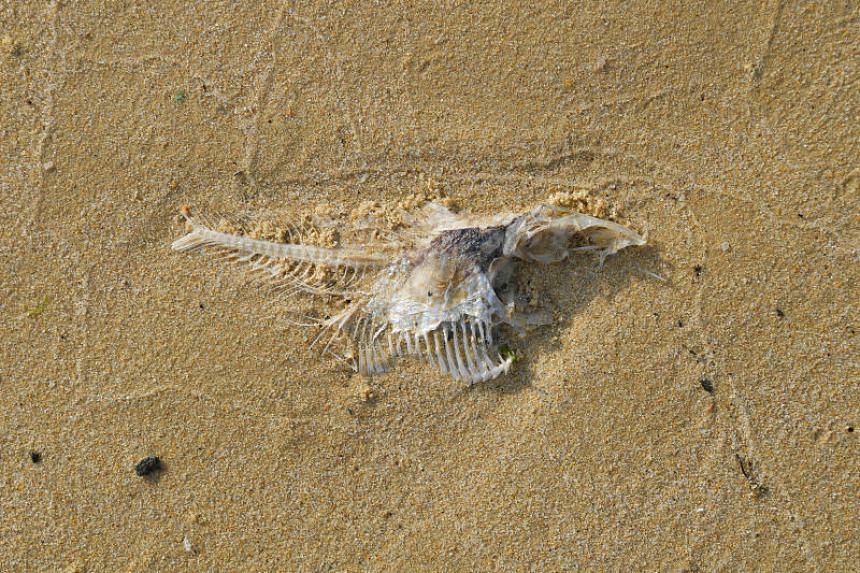 The silver-coloured fish were spotted washed up at Pasir Ris Park on Feb 3, 2020.