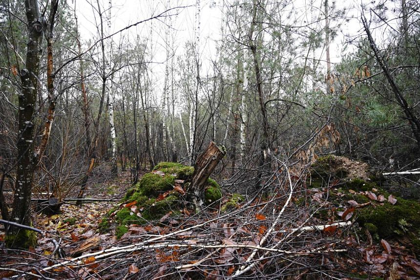 This picture taken on Dec 13, 2019 shows the regrowing Weitbruch forest that is facing the challenges of global warming in Weitbruch, France.