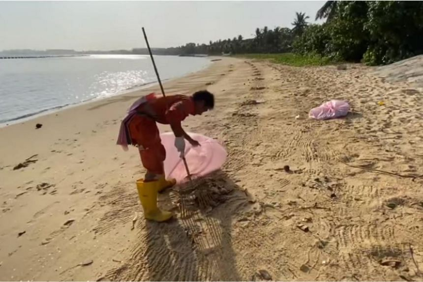 Three cleaners were seen along the approximately 150m stretch of shoreline clearing the dead animals into large bags.